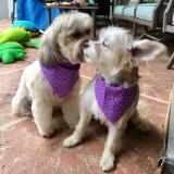 Cooper & Ollie