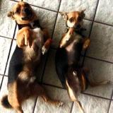 Jery & Timon