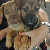 Leia & Chewy